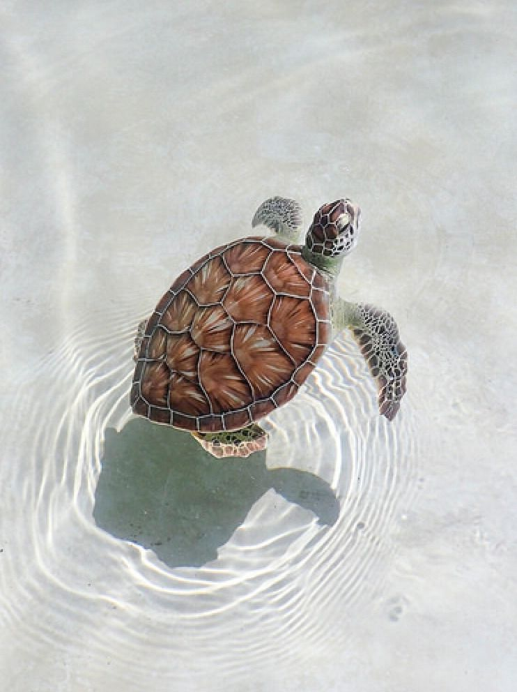 34+ Cool turtle wallpapers Free