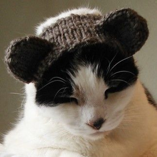 Bear ears on a cat; #knit pattern...... Dont know of ANY ...