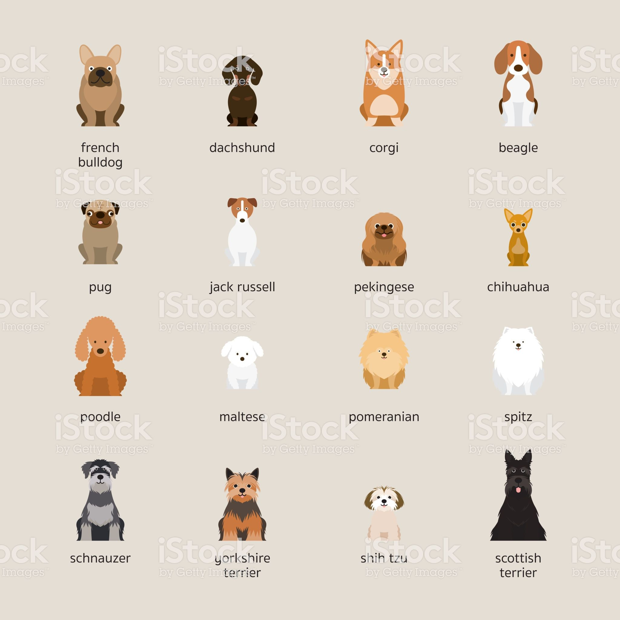 Dog Breeds Set Small And Medium Size Royalty Free Dog Breeds Set Small And Medium Size Stock Vector Art More Images Dog Breeds Dog Breeds Medium Medium Dogs