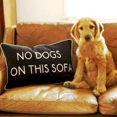 TODA REGRA TEM EXCEÇÃO | que tal dar uma folga para as normas da casa e relaxar? #inspiracao #almofadas #decoracao #pet   #SpenglerDecor