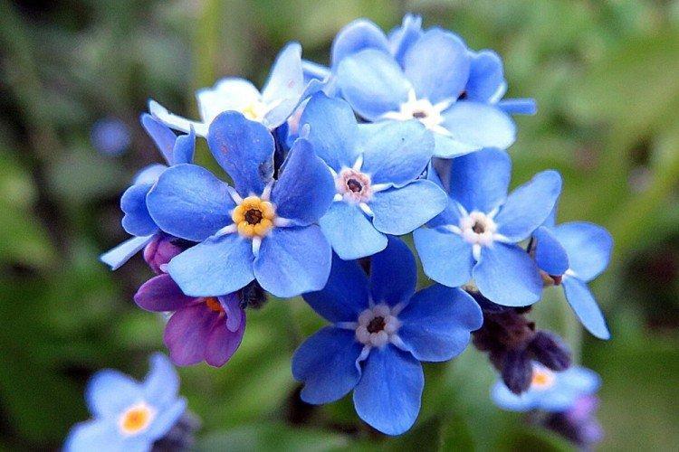 Многолетние цветы для дачи - фото с названиями (каталог) в ...