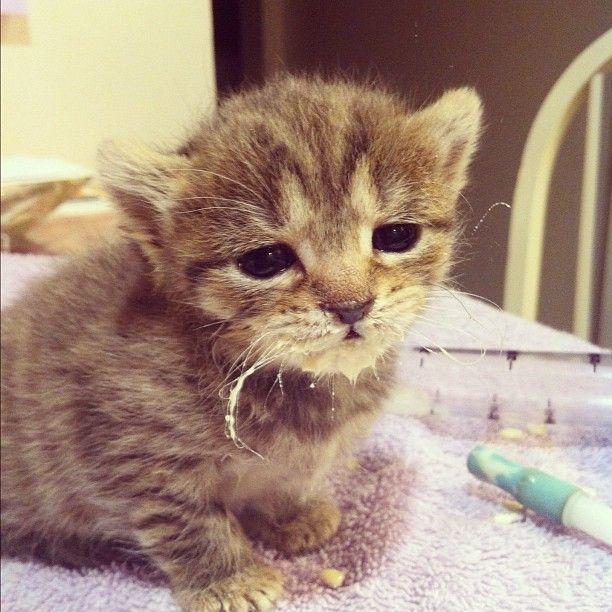 Kitten With Milk Moustache Kittens Cats Animals