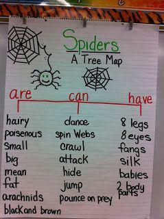 Spider lesson plan ideas using descriptive words skladt anchor charts ccuart Images