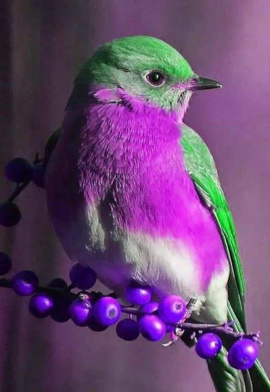 Una Nota De Color In 2020 Beautiful Birds Animals Beautiful Pretty Birds