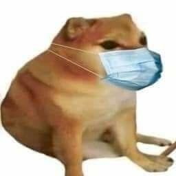 Cubre Boca Memes Divertidos Memes De Perros Chistosos Memes Graciosos Para Whatsapp