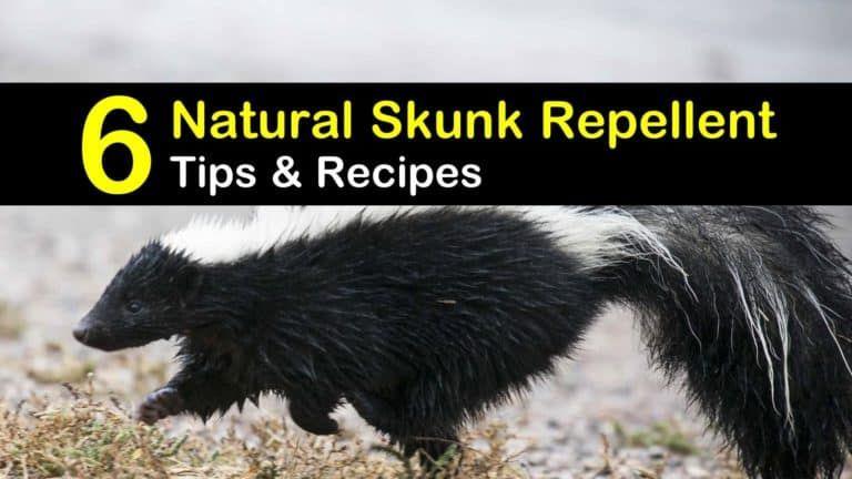 6 Safe Reliable Skunk Repellent Remedies In 2020 Skunk Repellent Skunk Bird Repellents