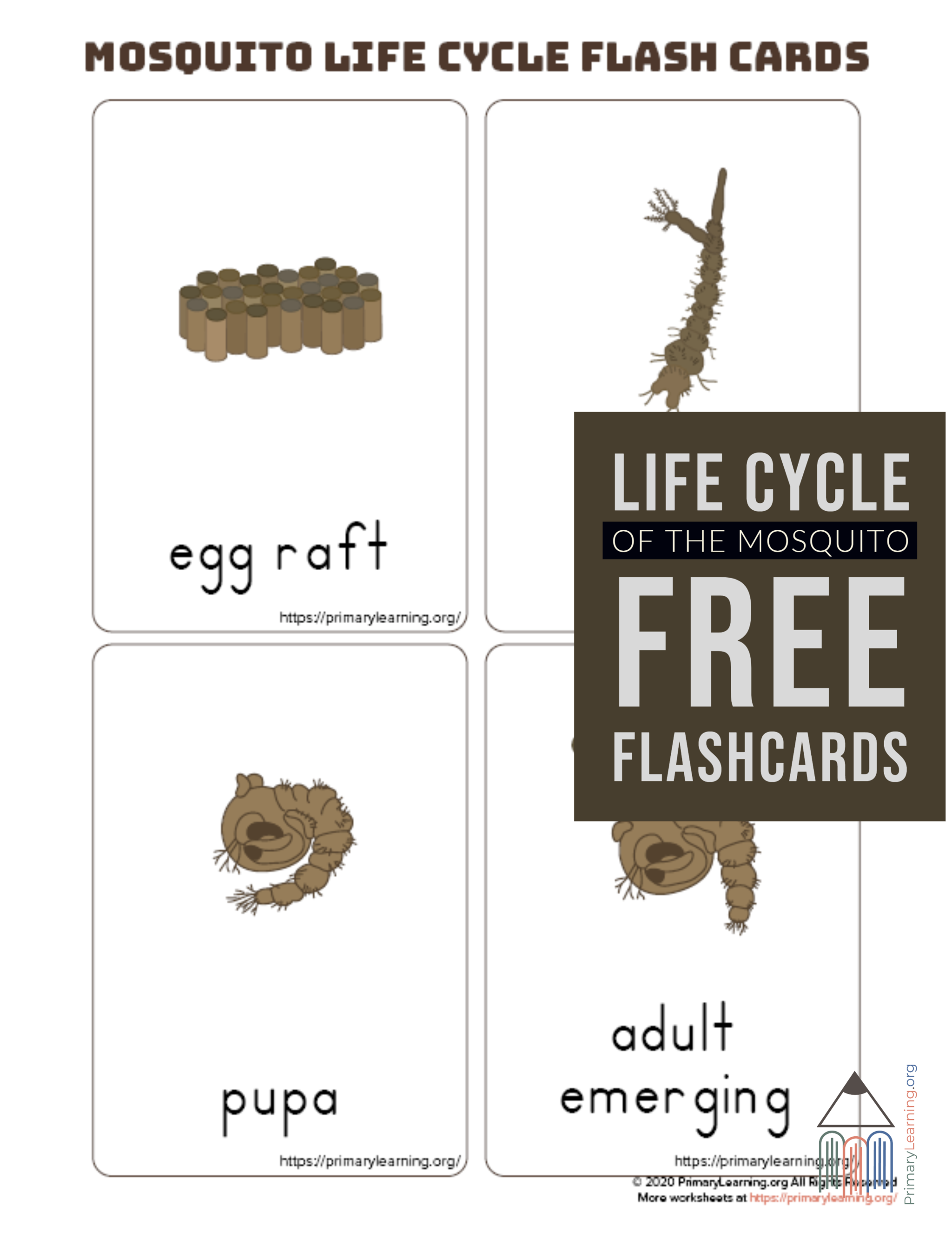 Mosquito Life Cycle Flashcards in 2020 (With images