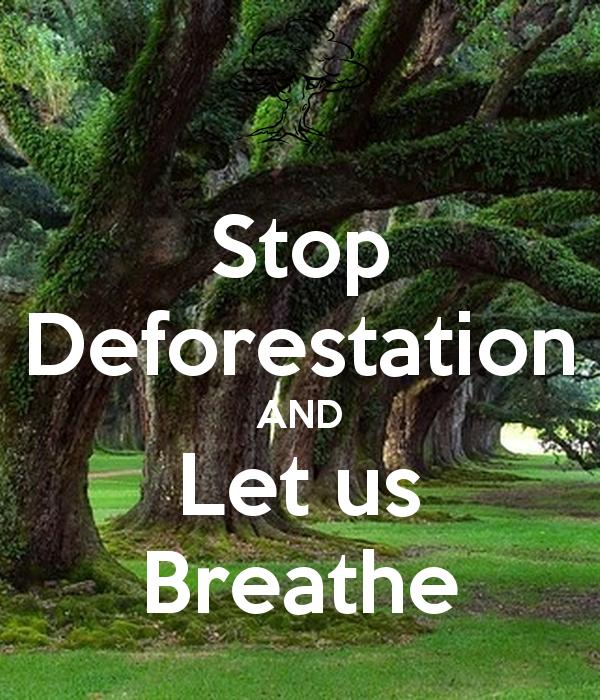 Slogan Tungkol Sa Deforestation