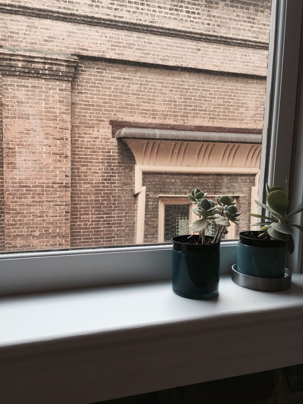 Succulents and window seals.
