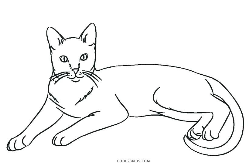 Baby Cat Coloring Sheet