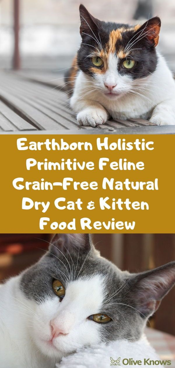 Earthborn Holistic Primitive Feline GrainFree Natural Dry