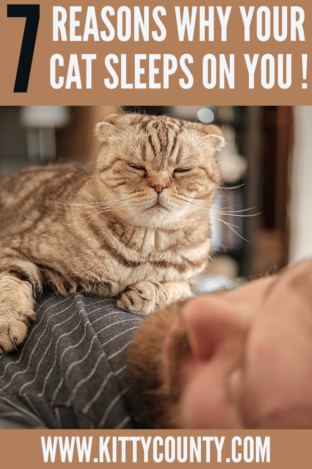 Why Does My Cat Sleep With Me Here Are The 7 Reasons Kitty County In 2020 Cat Sleeping Cats Cute Cats Photos