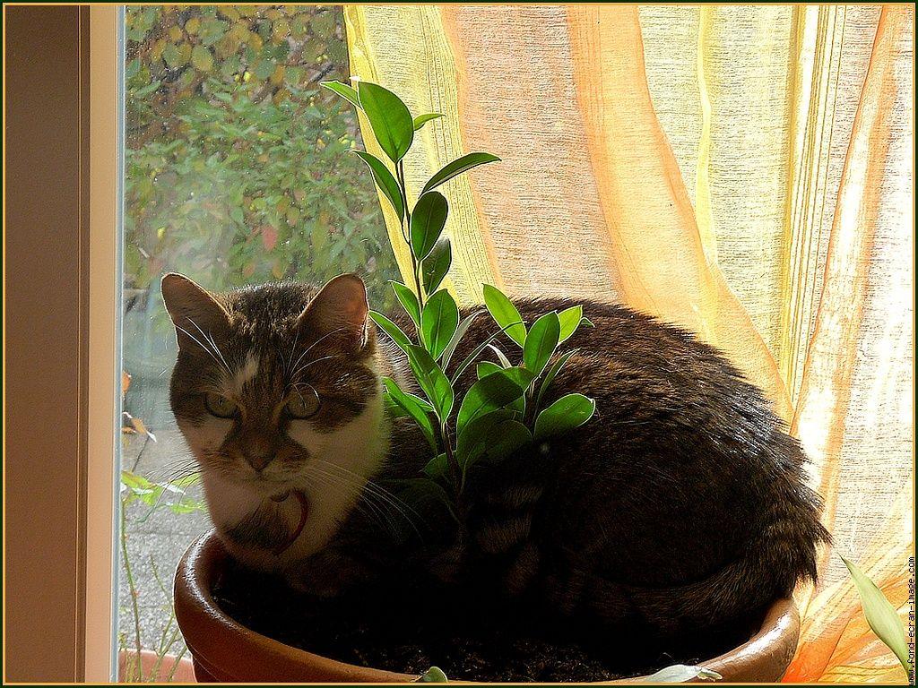 Comment loigner son chat des plantes gr ce ces astuces - Comment empecher un chat de gratter a la porte ...