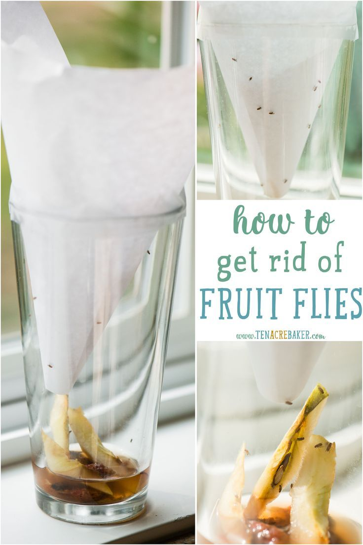 If youuve been trying to figure out how to get rid of fruit flies