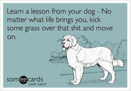 we must learn from our dogs