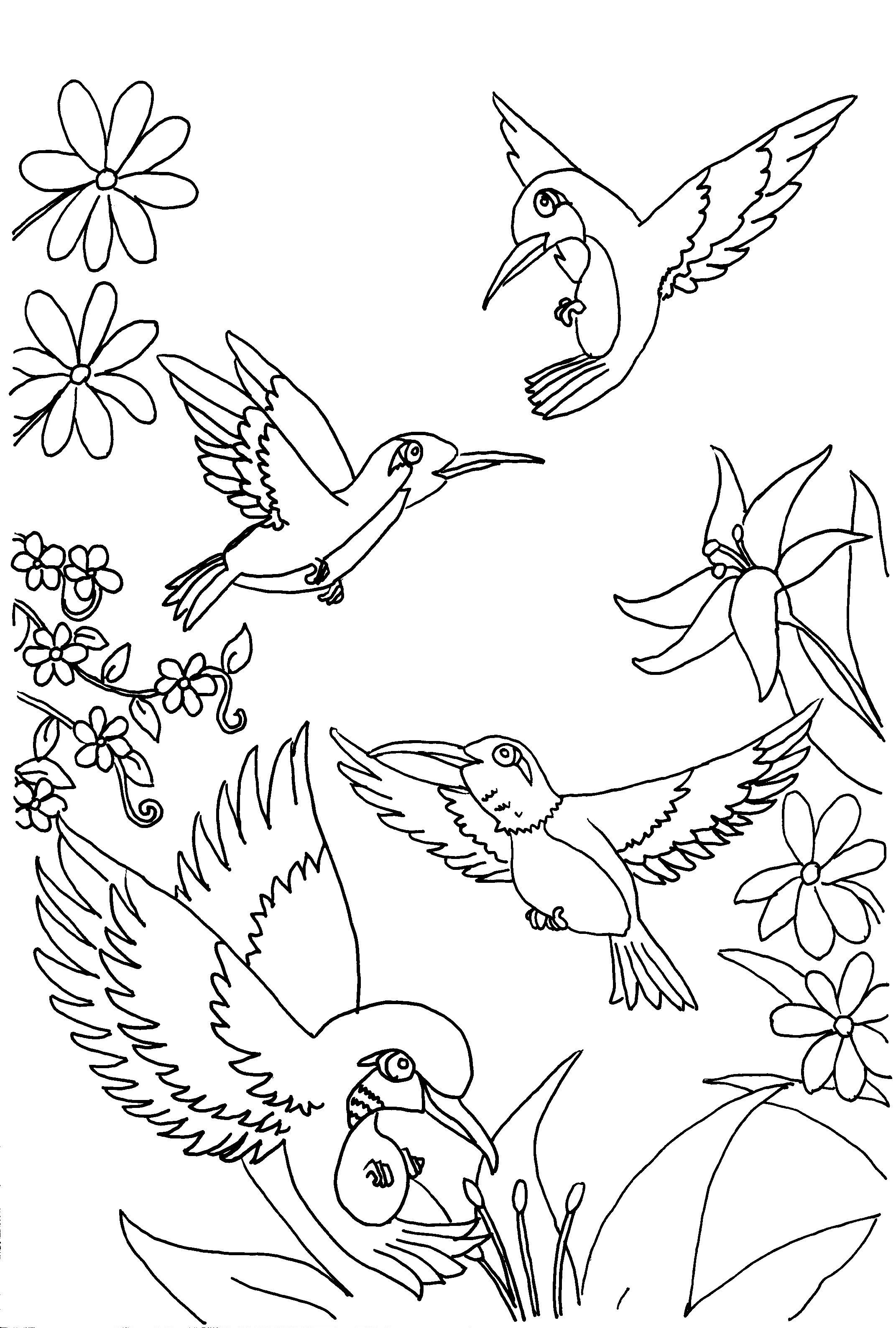 Hummingbirds Bird Coloring Pages Flower Coloring Pages