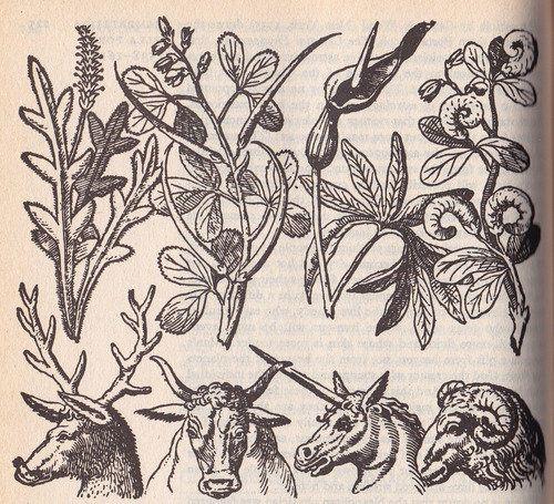 Giambattista della Porta. representative plant fe animal