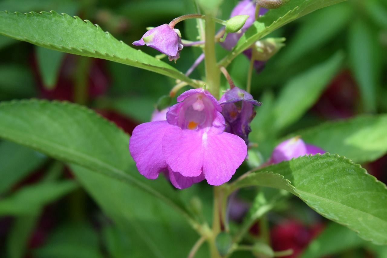 plante naturale pentru a crește pierderea în greutate)