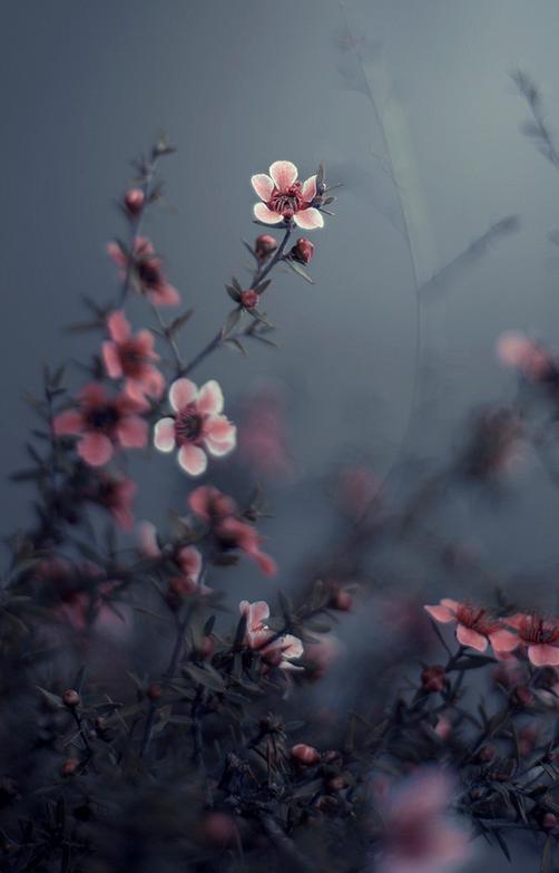 Fleurs nature pinterest fleurs photo fleurs et fleur jardin - Belle fleur a dessiner ...