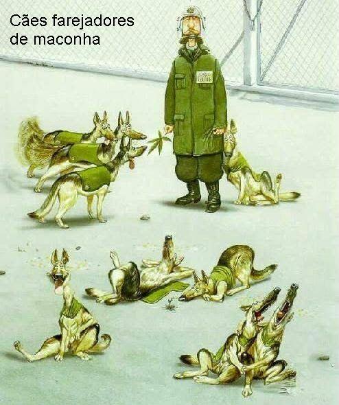 Cães farejadores de maconha