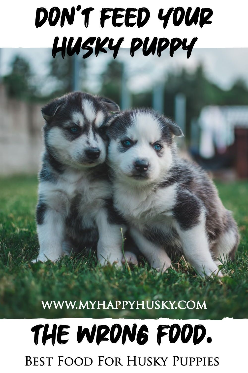 Best food for a husky puppy in 2020 husky puppy wet dog