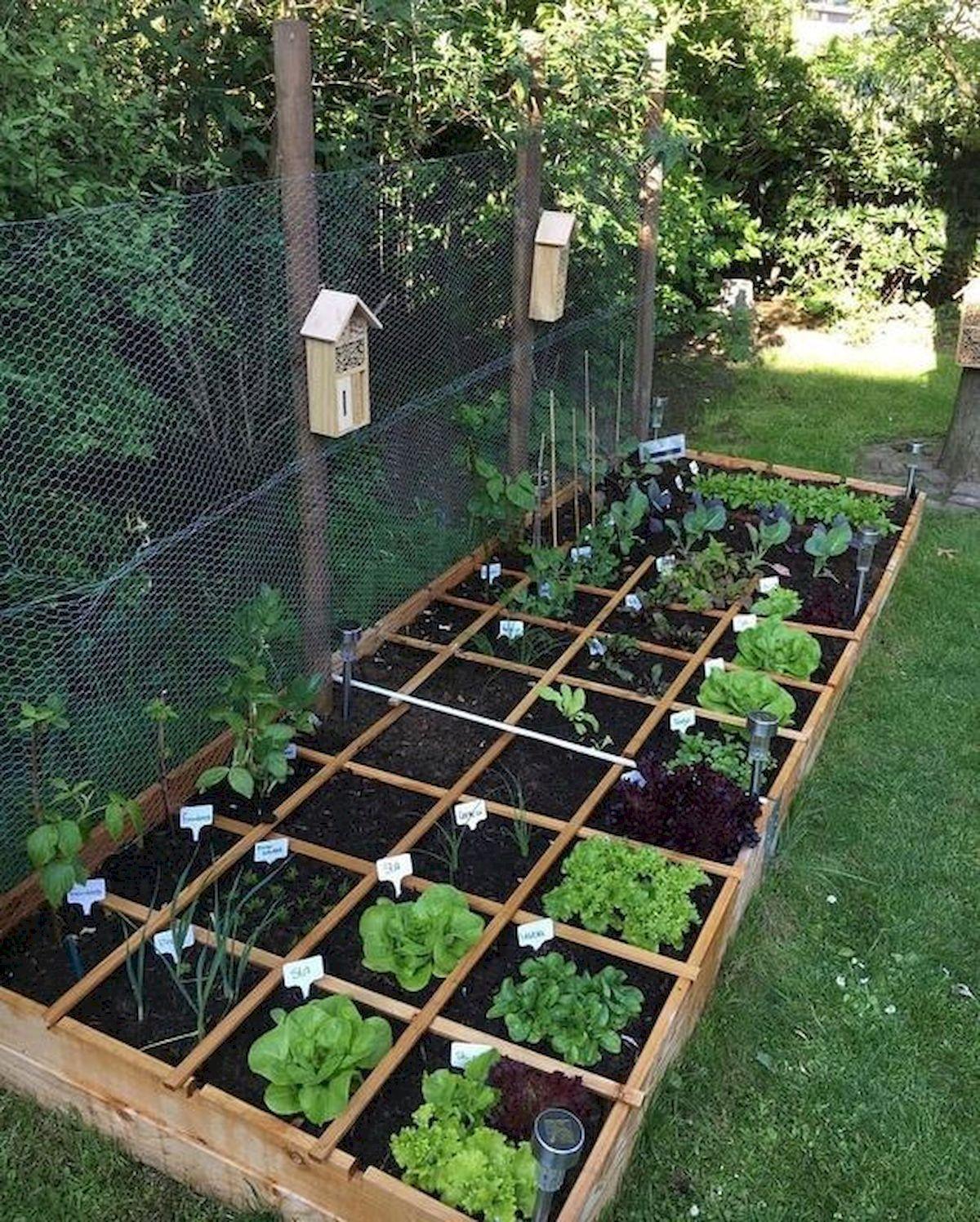 Garden Beds Design Ideas For Summer Vegetable garden for