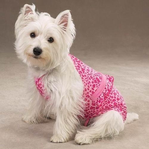 Leopard Bathing Suit Designer Dog Clothes Leopard Dog Puppy