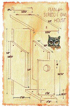 screech owl box plans from audubon socienty apparently