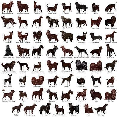 Best Pet Odor Eliminator Dog Breeds List Dog Breeds Types Of Dogs Breeds