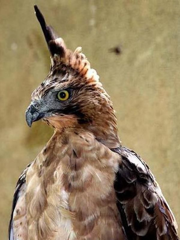 Burung Garuda  Google Search  Just for My Child  Eagles