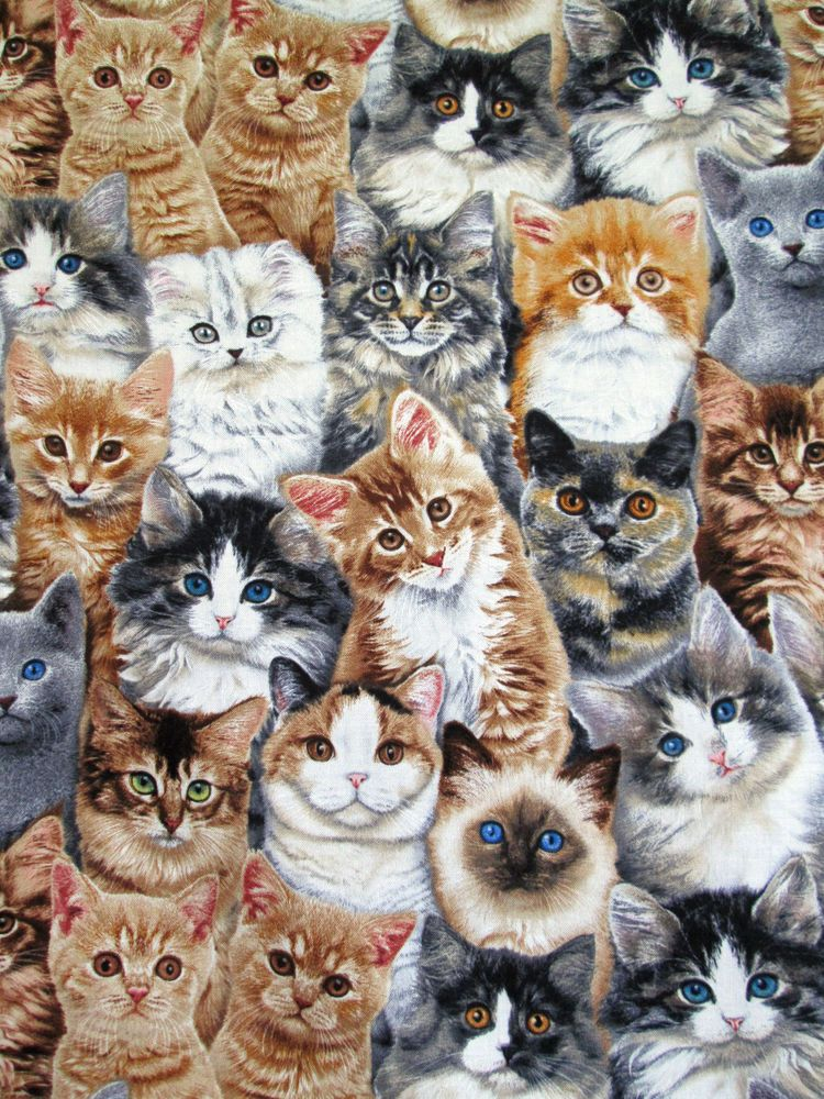 Adorable pets cats breeds kittens animal 2283 bty cotton