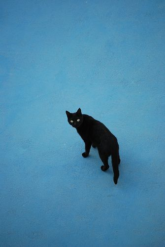 Santorini Cats   Flickr - Photo Sharing!