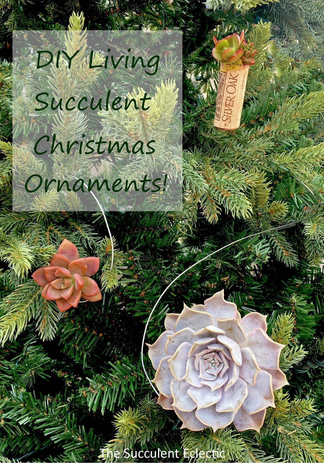 DIY Hanging Succulent Christmas Ornaments Natural