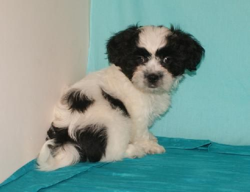 Patches Is 10 Weeks Old And About 2 5 Lbs He Gets Along With