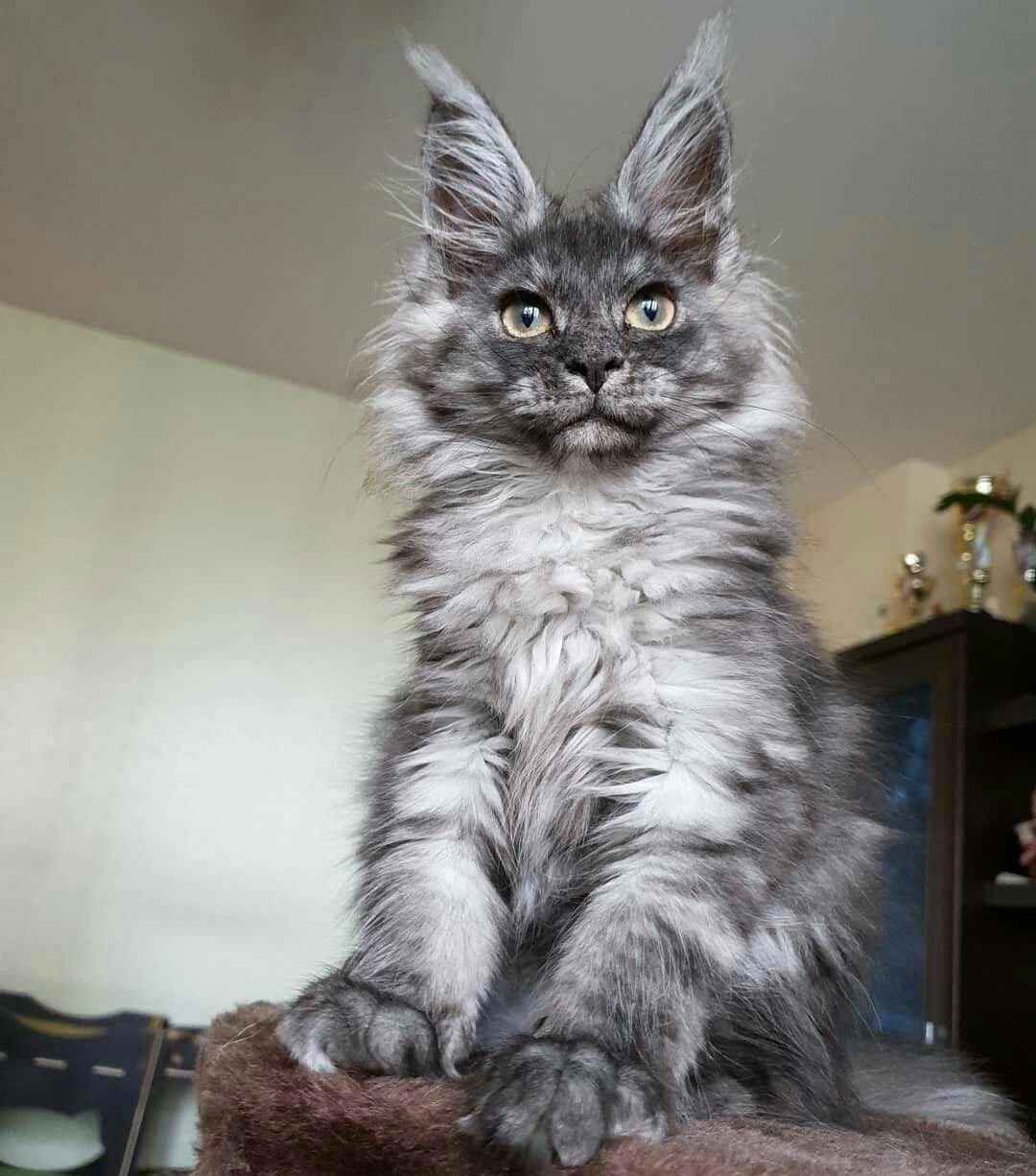 Can Cats Drink Milk CatsCharacters Cat having kittens