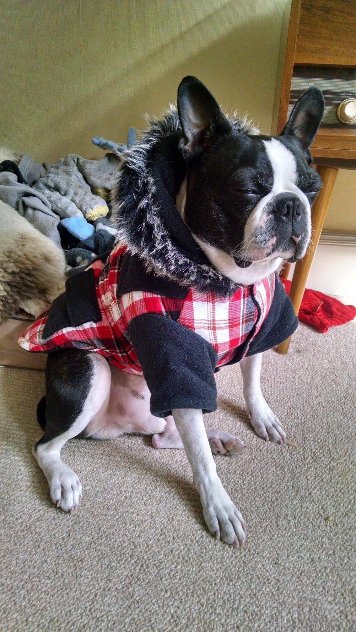 Pin By Judith Hoste On I Love Bostons Terrier Boston