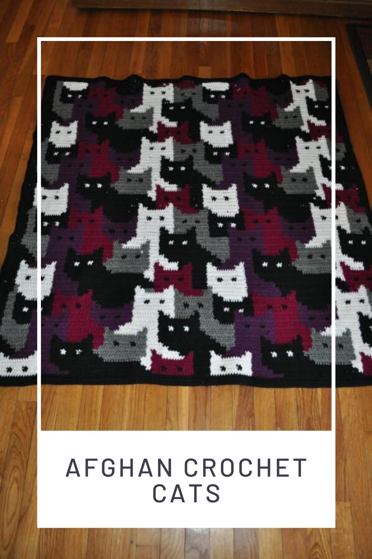 Cat afghan