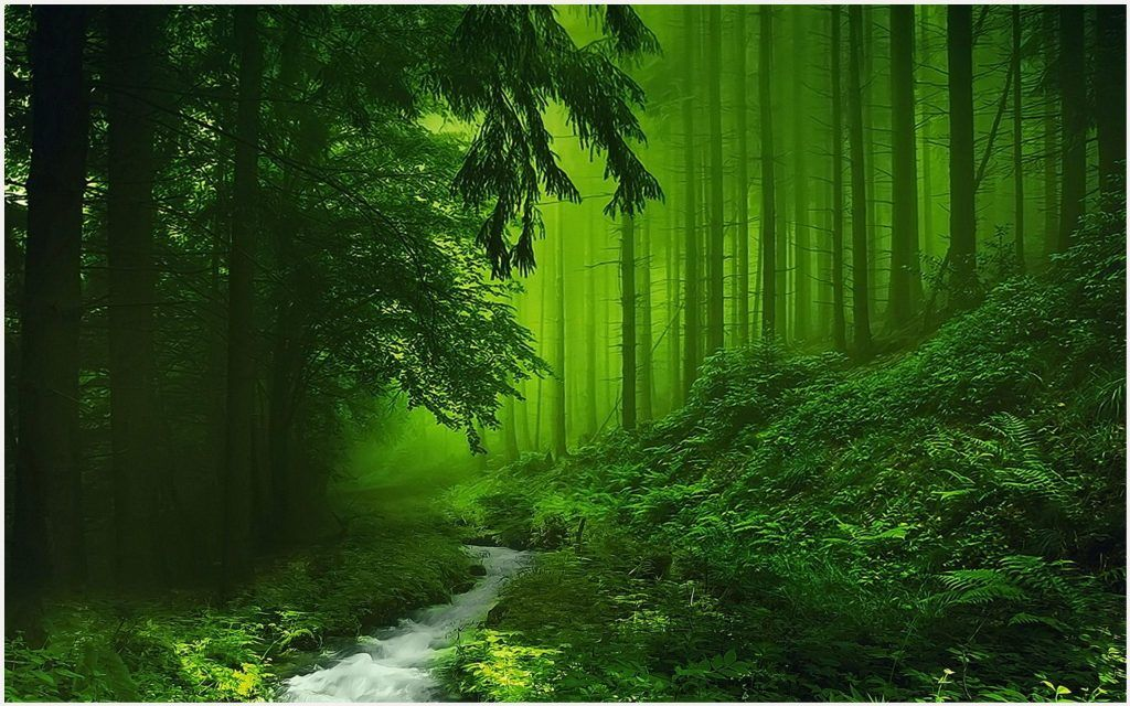 Green Scenery Of River Forest Wallpaper Green Scenery Of River Forest Wallpaper 1080p Gree Beautiful Nature Pictures Nature Pictures Beautiful Images Nature