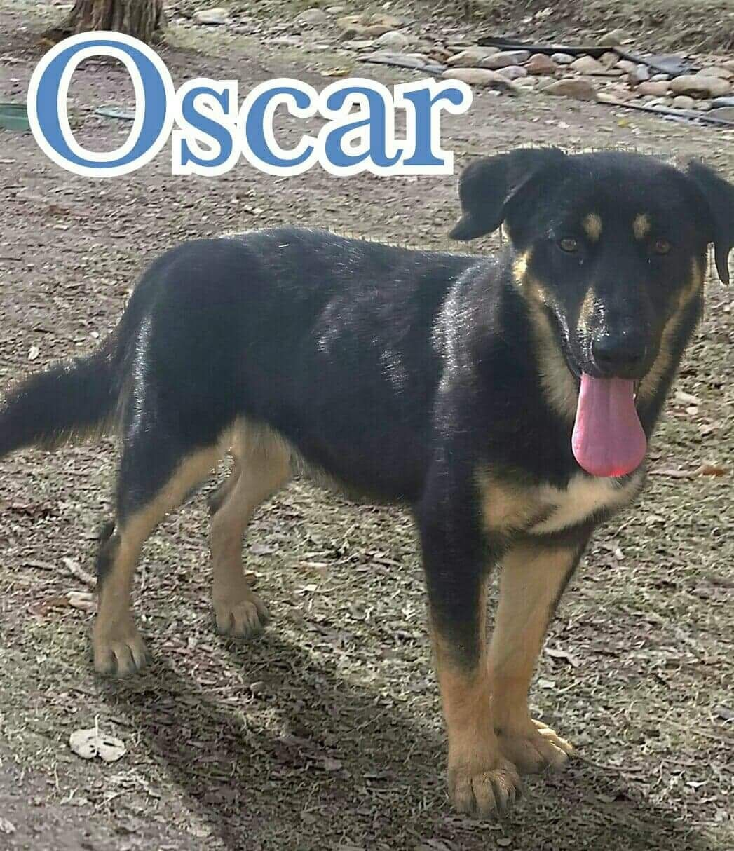 Adopt Oscar On Animals Needing Donations Fostering Adoptions