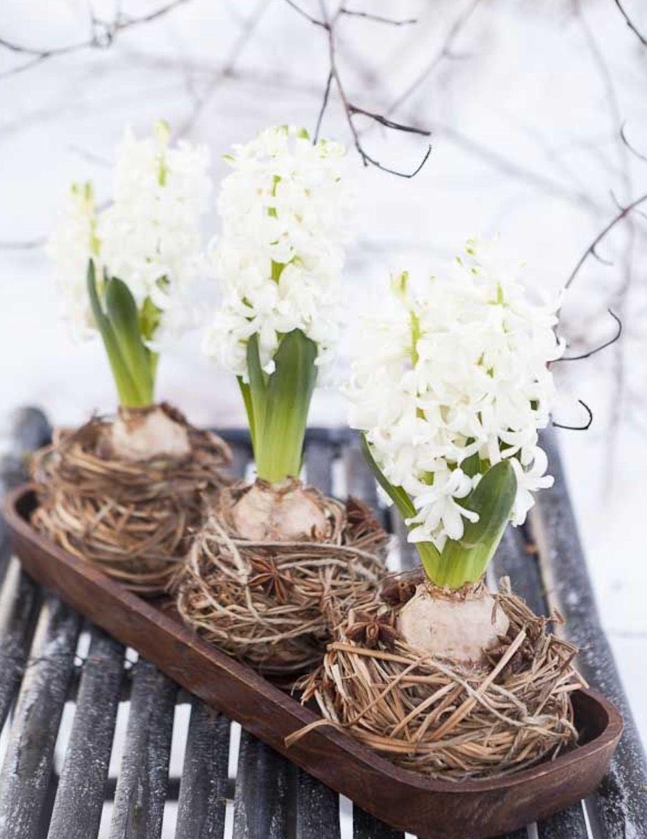 Hyacinths Decor Ideas To Breath Spring In - DigsDigs
