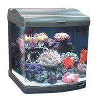 Amazon Com Jbj 12 Gallon Nano Cube Deluxe Style Aquarium 2x24w Compact Fluorescent Pet Supplies Aquarium Nano Aquarium Saltwater Tank