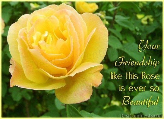 Friendship Like Rose Yellow Roses Rose Image