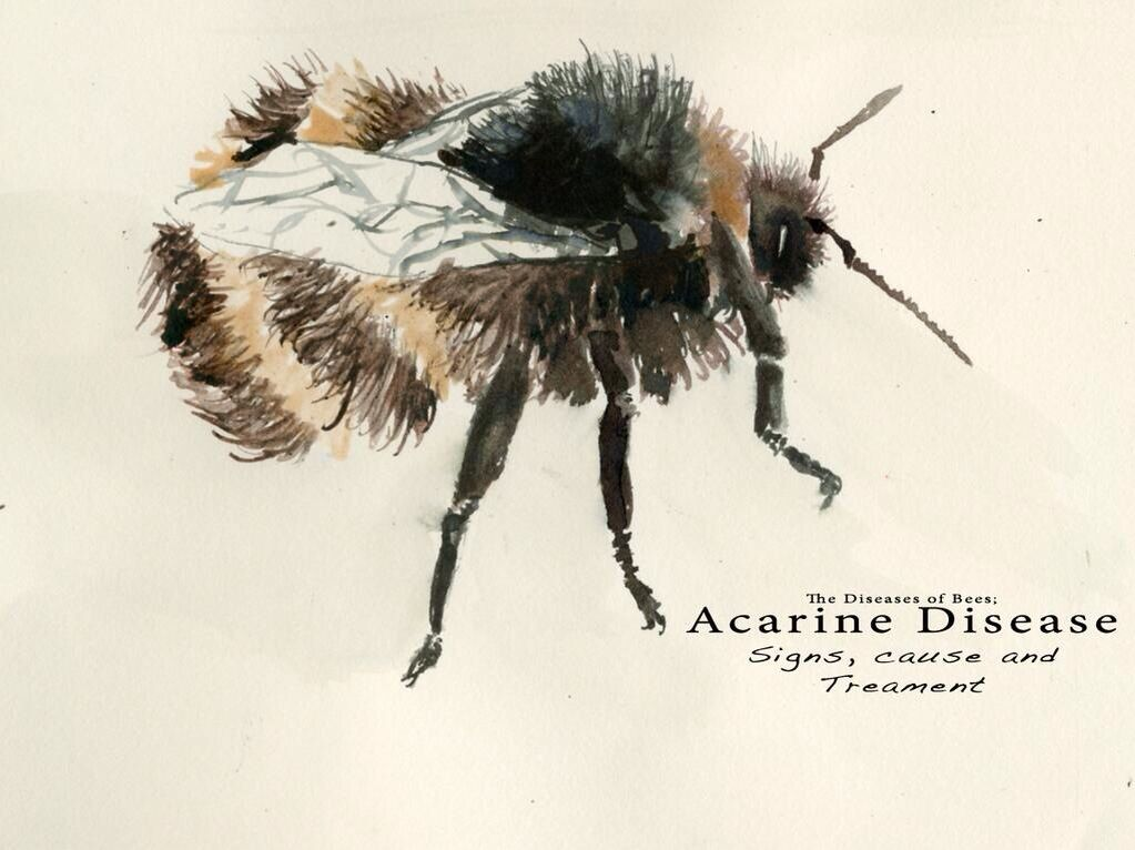 Cover Design For Diseases Of The Bees Ink Wash And Dip Pen