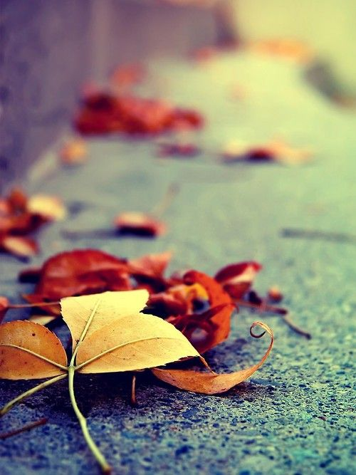 Pin By Sweet Caroline On I Love Fall Fall Wallpaper Iphone Background Iphone Wallpaper