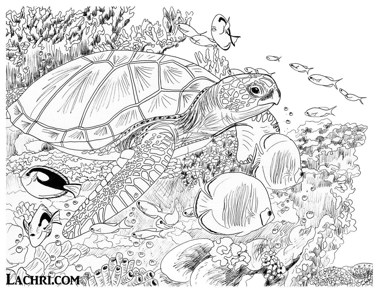 Sea Turtle Colored Pencil tutorial Ocean coloring pages