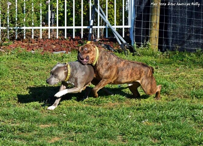 Herc playing with his mommy