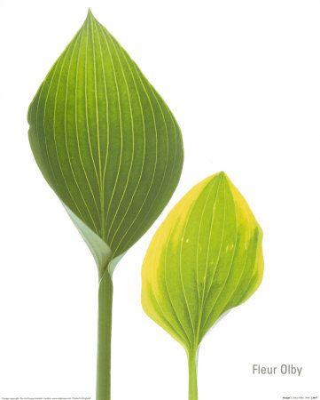 Fleur Olby
