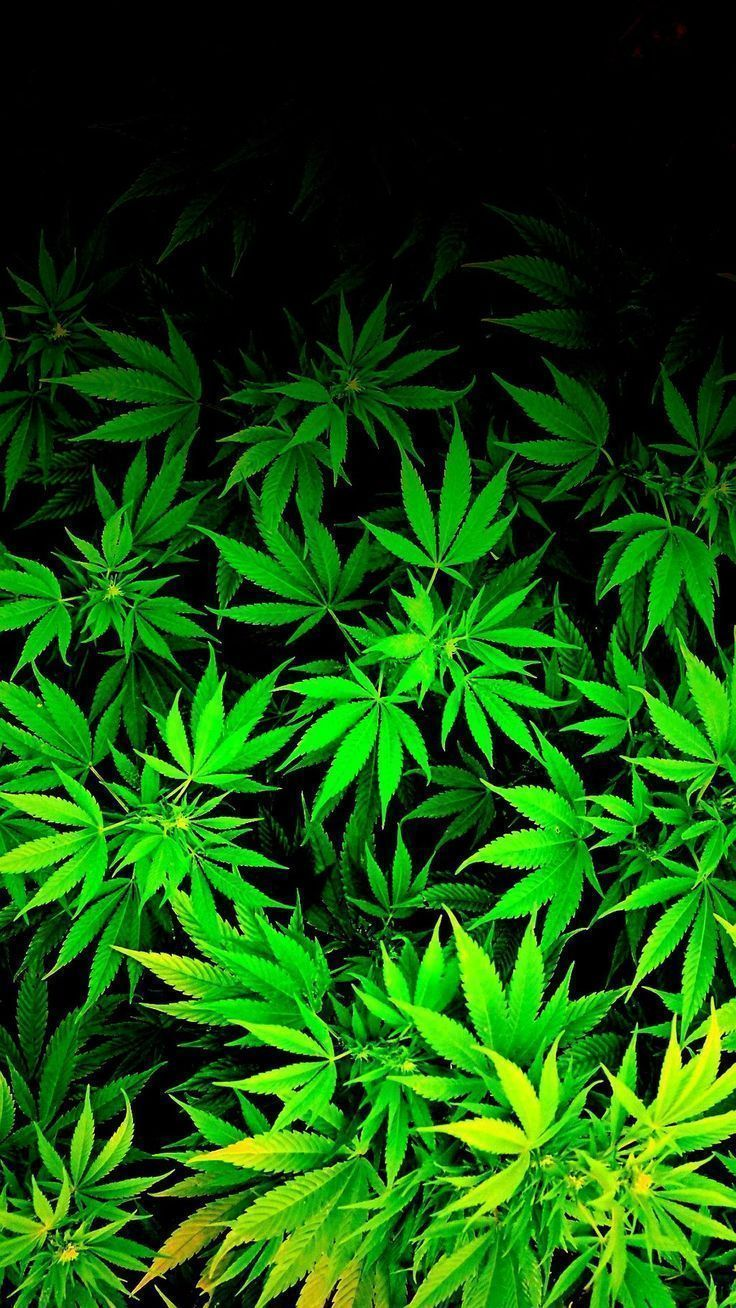 736x1308 - cool weed wallpapers - wallpaper zone | background