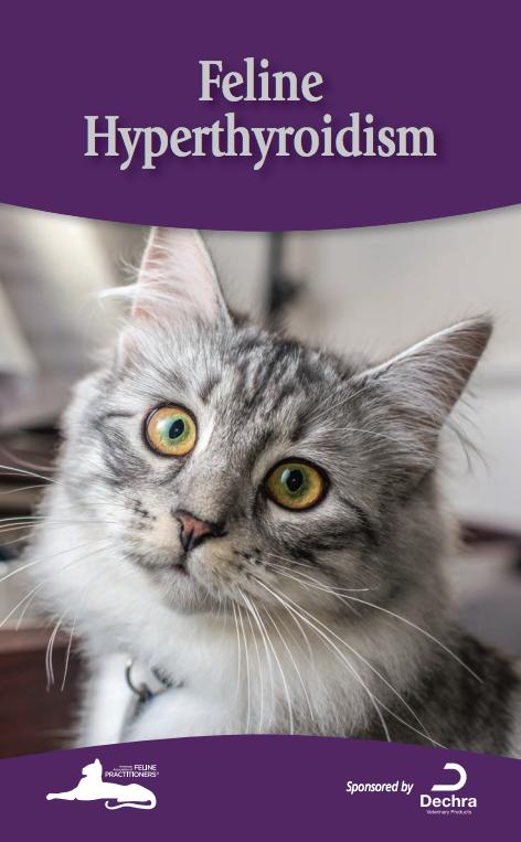 Feline Hyperthyroidism (With images) Feline
