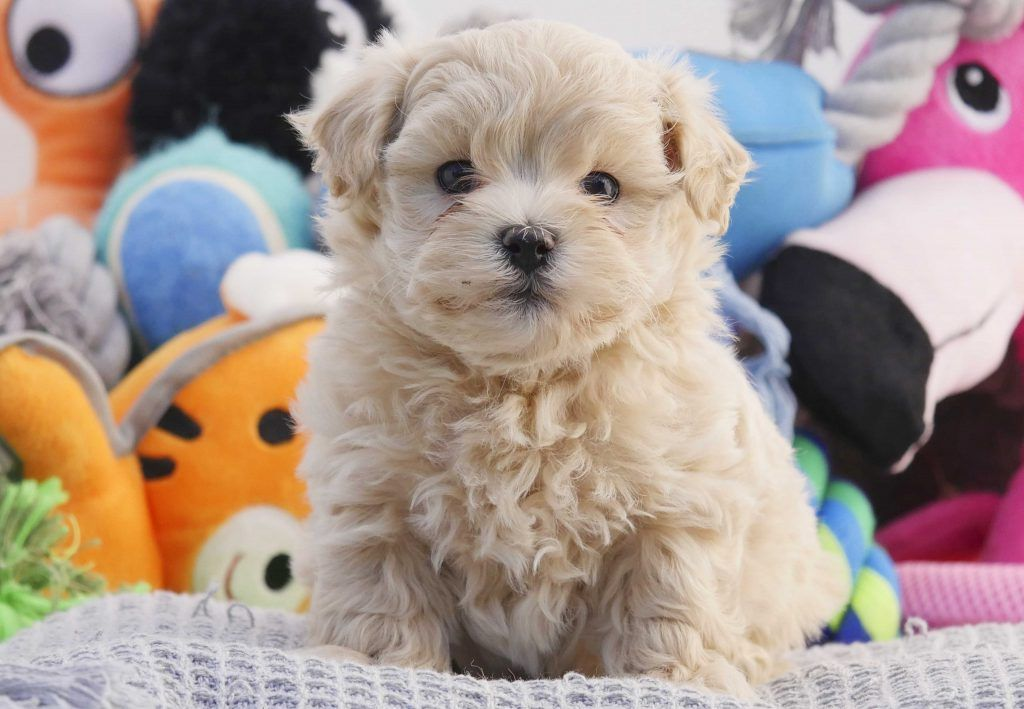 Small Breed Puppy Food Uk 2021